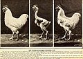 American poultry world (1915) (14593320690).jpg