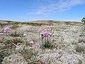 Anholt ørken - panoramio.jpg