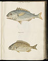 Animal drawings collected by Felix Platter, p1 - (71).jpg