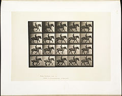 Animal locomotion. Plate 615 (Boston Public Library).jpg