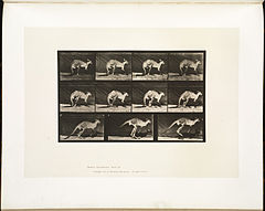 Animal locomotion. Plate 751 (Boston Public Library).jpg