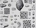 Annales de géologie et de paléontologie (1899) (18013467970).jpg