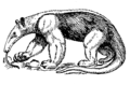 Anteater (PSF) 1.png