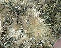 Anthophyllite-362650.jpg