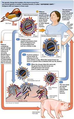 AntigenicShift HiRes.png