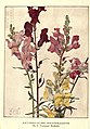 Antirrhinums (Snapdragons) By E. Fortescue Brickdale.jpg