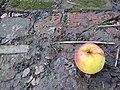 Apple all alone (8420535277).jpg