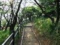 Approach to Yamada-Fuji 山田富士へ - panoramio.jpg