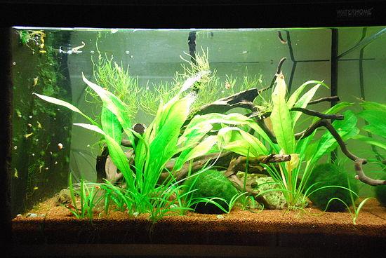 haltung von s wassergarnelen das aquarium wikibooks. Black Bedroom Furniture Sets. Home Design Ideas