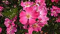 Aramaki rose park07s2816.jpg