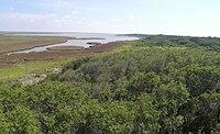 Aransas national wildlife refuge1.jpg
