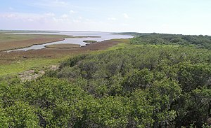 Aransas National Wildlife Refuge - Wetlands at Aransas National Wildlife Refuge looking out from the 40 ft observation tower.