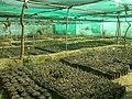 Aravalli BDPark ph12.jpg