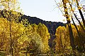 Arboles - panoramio (3).jpg