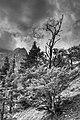 Arbusti - Molveno (TN) Italia - 14 Agosto 2012 - panoramio.jpg