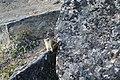 Arctic predator in Pangnirtung.jpg