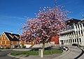 Arendal Kanalplassen 174917-1.jpg