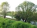 Argine del Bacchiglione (PD - Roncaglia di Ponte S. Nicolò) - panoramio.jpg