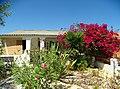 Armona Island (Portugal) (48777419877).jpg
