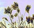 Artistic Effect Grass.jpg