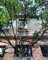 Arvores entrelaçam estrutura de casa Vila Maria Zelia.jpg