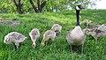 Assiniboine Park Zoo, Winnipeg (480564) (24749868179).jpg