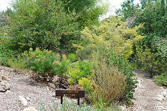 Conejo Valley Botanic Garden - Australian Garden.