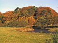 Autumn Colours at Happendon - geograph.org.uk - 70991.jpg