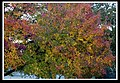 Autumn Leaves begin to fall-006 (5659051503).jpg