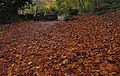 Autumn leaves at Sprotbrough and Cusworth, South Yorkshire.jpg