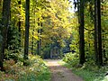Autumn path ^2 - Flickr - Stiller Beobachter.jpg