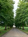 Avenue of trees near Papworth Hospital - geograph.org.uk - 987171.jpg