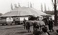 Avstrijski cirkus Medrano v Mariboru 1957 (3).jpg
