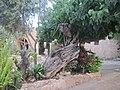 Ayia Napa Monastery22 by Paride.JPG