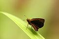 BN3Q4276 butterfly.JPG