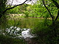 Bachelors Grove 2008 pond.jpg