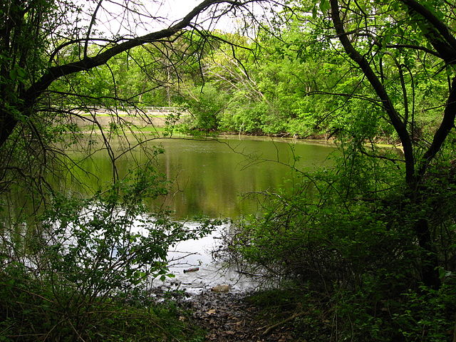 Pond surrounded by vegetation