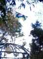 Bandeira de Trindade hasteada (cropped).png