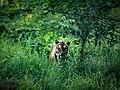 Bangabandhu Sheikh Mujib Safari Park 24.jpg