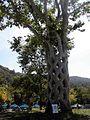 Baskettree.jpg