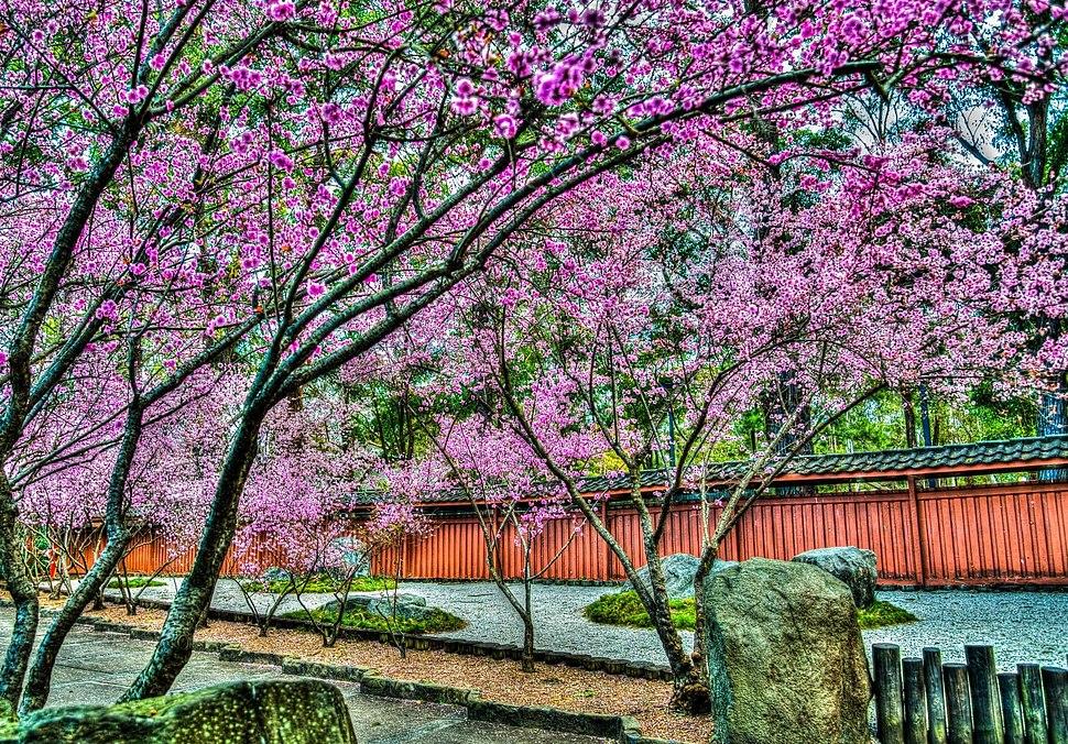 Beautifultrees