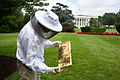 Beekeeper Charlie Brandts works on the South Grounds of the White House.jpg