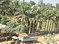 Belauri Bazar, Belauri 10400, Nepal - panoramio (2).jpg