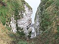 Bempton Cliffs - geograph.org.uk - 604672.jpg