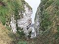 Bempton Cliffs - geograph.org.uk - 604672.jpg