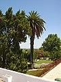 Benavente - Portugal (327580330).jpg