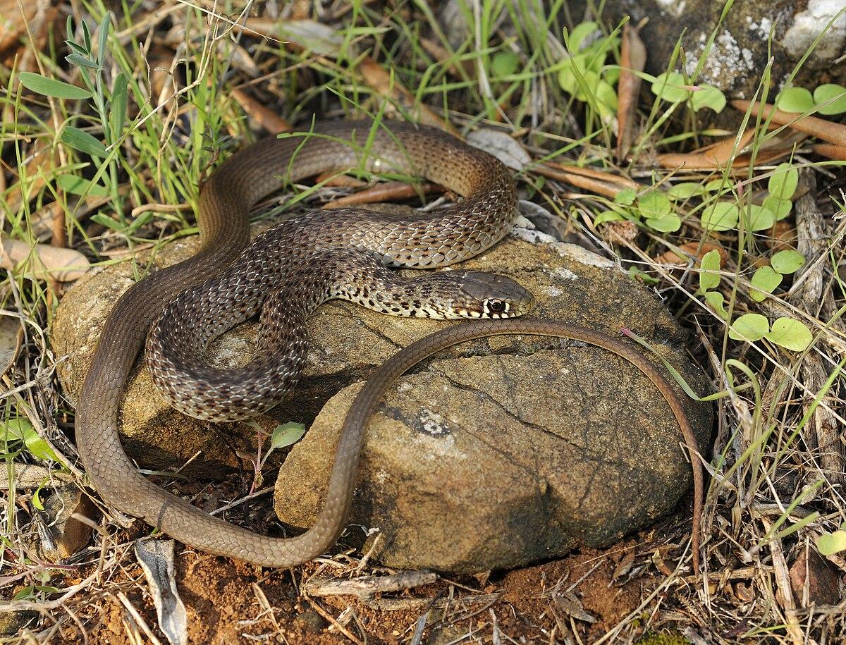 snake - photo #22