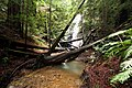 Berry creek - panoramio - Vadim Manuylov.jpg