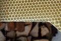 Bienenwabe im Bau 10a.jpg