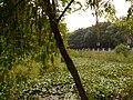 Binhu, Wuxi, Jiangsu, China - panoramio (248).jpg